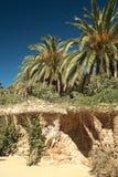 棕榈树在巴塞罗那 库存图片