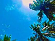 棕榈树在晴朗的天空的绿色叶子 椰子树树顶面数字式例证 免版税图库摄影