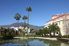 棕榈树在Estepona,西班牙 库存照片