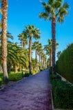 棕榈树在Lapineda 免版税库存照片