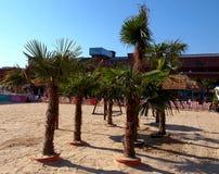 棕榈树在Manufaktura 库存图片
