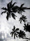 棕榈树在Mirissa,斯里兰卡 库存照片
