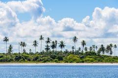 棕榈树在Morro de圣保罗,巴西 免版税库存照片