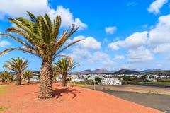 棕榈树在Uga村庄 库存照片