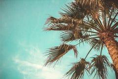 棕榈树夏天天空定了调子作用底视图拷贝空间 图库摄影
