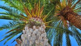 棕榈树夏天背景 库存图片