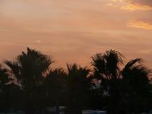 棕榈树天空 免版税库存照片
