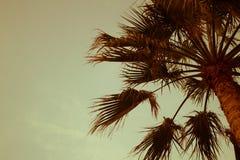 棕榈树太阳光日落日出漂白了被定调子的作用 免版税库存图片