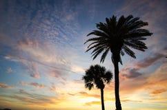 棕榈树夫妇在日落的 免版税库存照片