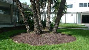 棕榈树安排 库存图片