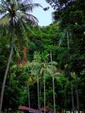 棕榈树密林 免版税库存照片