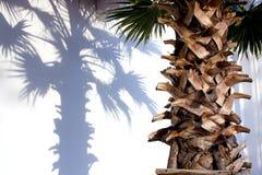 棕榈树干 库存照片
