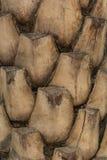 棕榈树干 免版税库存照片