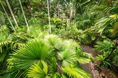 棕榈树庭院 免版税库存图片