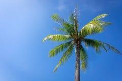 棕榈树或椰子反对天空蔚蓝 免版税库存图片