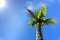 棕榈树或椰子反对天空蔚蓝 库存图片