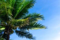 棕榈树或椰子反对天空蔚蓝 免版税库存照片