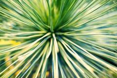 棕榈树或装饰室内植物被弄脏的背景特写镜头宏指令鲜绿色的叶子  免版税库存图片