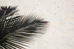 棕榈树投下了在一个遥远的热带海岛海滩的光滑的金黄沙子的阴影在多米尼加共和国的 库存图片