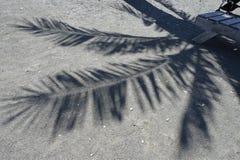 棕榈树投下了在石海滩的阴影 免版税图库摄影