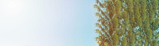 棕榈树抽象看法的水平的图象与拷贝空间的文本广告横幅的 夏天背景 热带的掌上型计算机 免版税库存照片