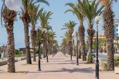 棕榈树排行了散步Yasmine Hammamet,突尼斯,非洲 库存图片