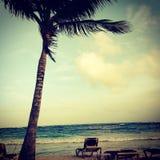 棕榈树摇摆 库存图片