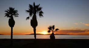 棕榈树日落海洋 图库摄影