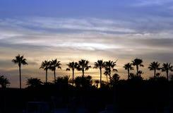 棕榈树日落 库存照片