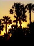 棕榈树日落Sillhouette 免版税库存图片