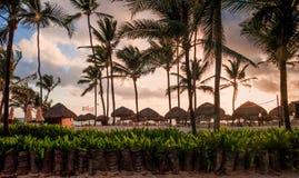 棕榈树早晨 库存照片