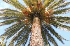 棕榈树晴天 免版税图库摄影