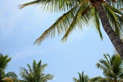 棕榈树机盖 库存图片