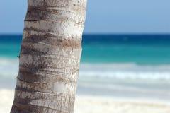 棕榈树树干 免版税库存图片