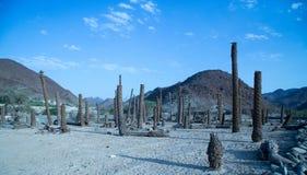 棕榈树桩 库存照片