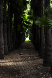 棕榈树森林道路 免版税库存图片
