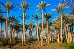 棕榈树森林  库存照片
