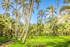 棕榈树森林 图库摄影