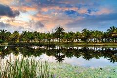 棕榈树池塘 免版税库存图片
