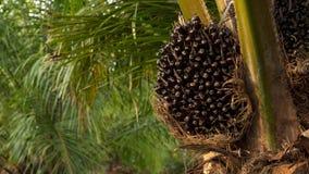 棕榈树油 图库摄影