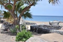 棕榈树海岩石 库存图片