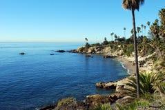 棕榈树海岸线 图库摄影