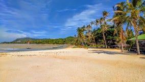棕榈树海滩 免版税库存图片