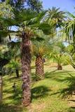 棕榈树热带庭院  库存照片