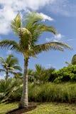 棕榈树热带植被 免版税库存照片