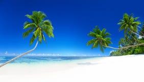 棕榈树热带海滩暑假概念 免版税库存图片