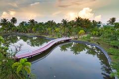 棕榈树热带风景在池塘反射了 免版税库存图片
