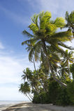 棕榈树热带巴西海滩 库存图片