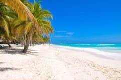 棕榈树照片和在蓝天背景的白色沙子 免版税图库摄影