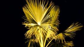 棕榈树特写镜头反对黑背景的 股票录像